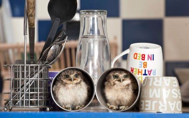 This photo was part of an animal photo album in the London Times ! Young Burrowing Owls adapting rather well to a new home !